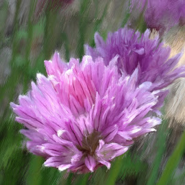 Violet Truth by Ernie Kasper - Digital Art Things ( digitalart, naturelovers, artlovers, peaceful, art, upclose, relaxing, artwork, nature, violet, artist, flowers, flower )