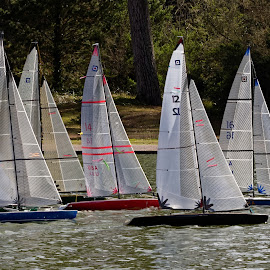 Wheeler Class Race 1 by Raphael RaCcoon - Artistic Objects Toys ( sailboats, artistic objects )