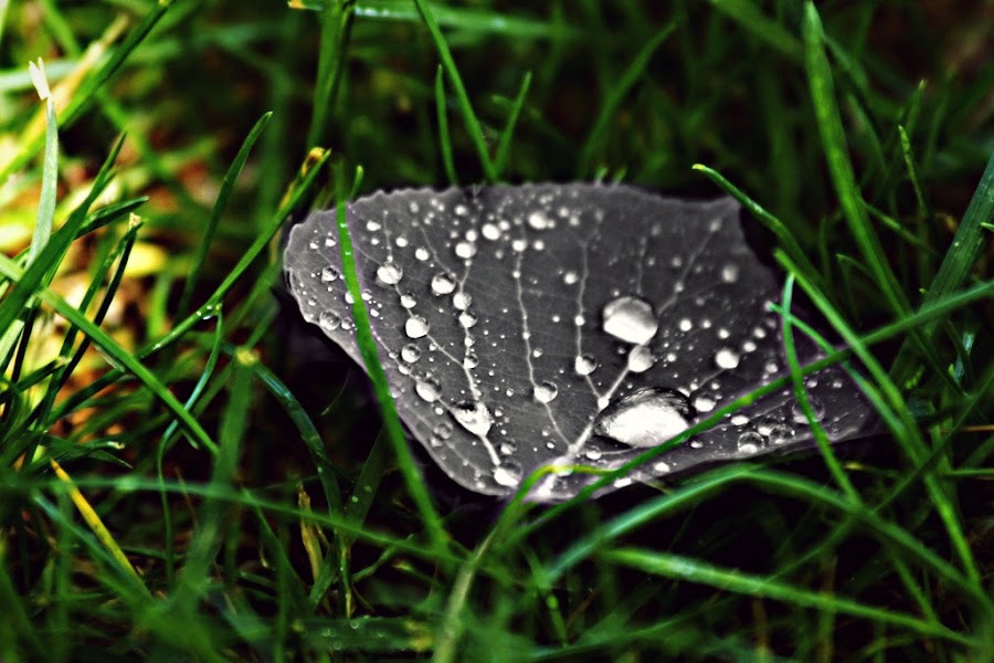 by Shane Egan - Digital Art Things ( water, nature, grass, dew, plants, leaf )
