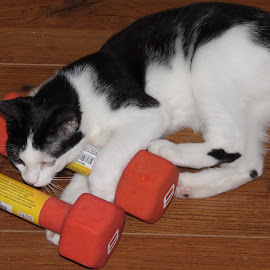 by Linda Tatler - Animals - Cats Playing