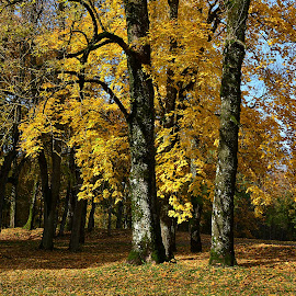 Autumn by Eugenija Seinauskiene - Nature Up Close Trees & Bushes