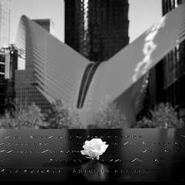 by Christian Roger Costanzo - Buildings & Architecture Places of Worship ( memorial, church, 911 memorial, new york, nyc, 911, flower, photographie, photography )