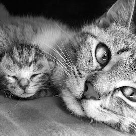 Motherly watch by Wendy Erlendson - Animals - Cats Kittens ( love, cat, kitten, hugs, tabby, groom,  )