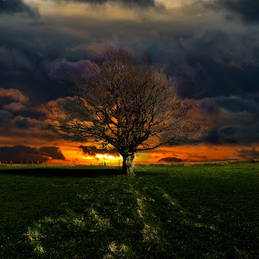 apocalypse tree by Tracey Dobbs - Landscapes Sunsets & Sunrises ( clouds, tree, sunset, landscape, fire )