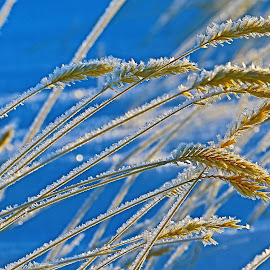 by Brian Robinson - Nature Up Close Leaves & Grasses
