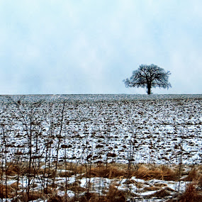 Solitary and Nude by Koenraad De Roo - Landscapes Prairies, Meadows & Fields ( winter, cold, tree, leafless, somber, snow, minimalism, horizon,  )