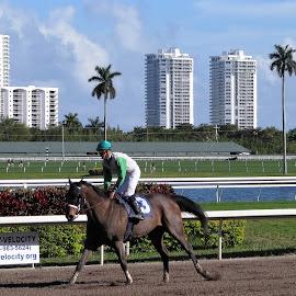 Jockey & horse by Priscilla Renda McDaniel - Sports & Fitness Other Sports ( jockey, racing, horse, horse track, miami skyline, casino, gulfstream )