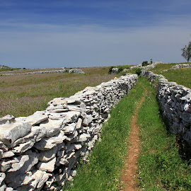 Between stone walls by Gil Reis - Landscapes Prairies, Meadows & Fields ( hills, life, paths, bio, nature, places, portugal )
