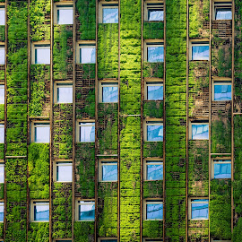 Living Wall by Vinod Kalathil - Abstract Patterns ( abstract, chile, window, santiago, wall )