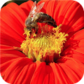 Lovely Petals. Super Wallpapers APK for Ubuntu