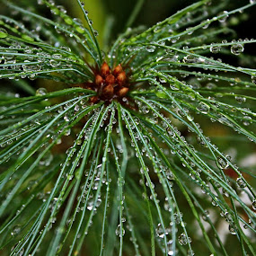 by Alana Carson - Nature Up Close Natural Waterdrops