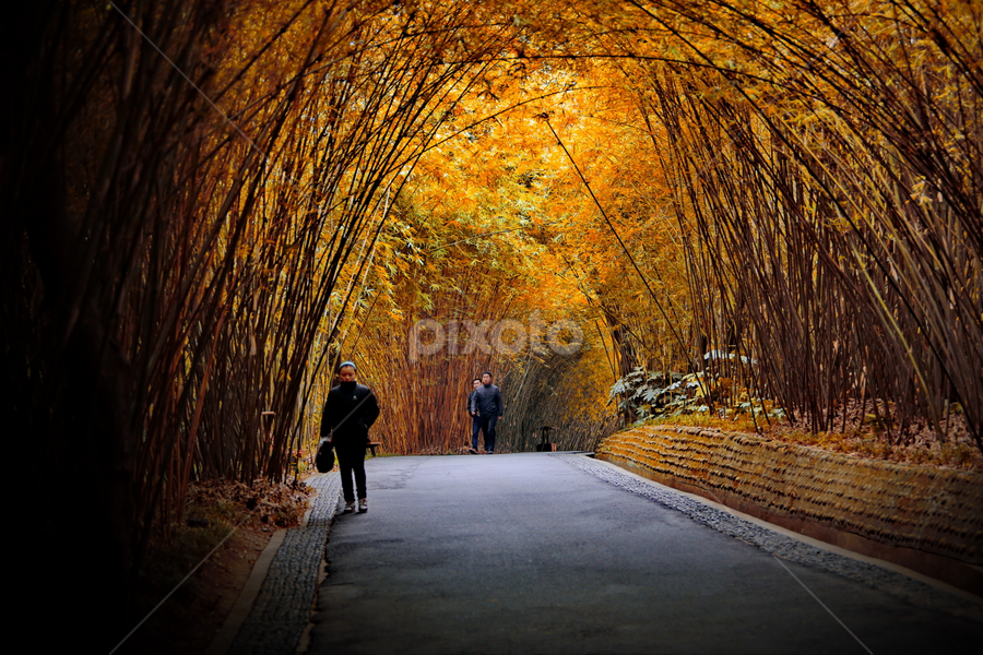 golden gate by DODY KUSUMA  - Landscapes Travel ( paths, stock, pixotoindonesia, landscape, pwcpaths, china, fall, color, colorful, nature, path )