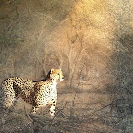 by Bjørn Borge-Lunde - Digital Art Animals ( big cat, wild animal, cheetah )