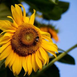 by Domenico Liuzzi - Flowers Flowers in the Wild
