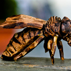 Bee by Tigi Borg - Artistic Objects Other Objects ( statue, wood, color, fine art, tigiphoto, things )