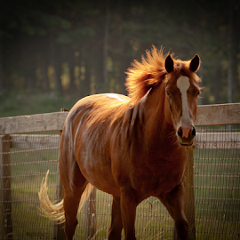End of the Day by Myra Brizendine Wilson - Animals Horses ( rescue horses, carolina equine rescue & assistance, equine, horses, horses running, nc, cera, equine rescue, horse,  )