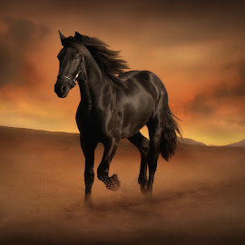 Freedom in the Desert by Jennifer Woodward - Digital Art Animals ( animals, desert, equine, horses, sunset, horse, sunrise )