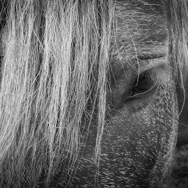 Kind eye by Alex Rosenkranz - Animals Horses