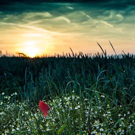 Helen Keller — 'Keep your face to the sun and you will never see the shadows.' by Goran Dombaj - Landscapes Prairies, Meadows & Fields