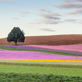 Silver Falls Seed Company by Chris Bartell - Landscapes Prairies, Meadows & Fields ( field, oregon, seed, landscape, flowers, silverton )