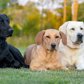 by Rob Ebersole - Animals - Dogs Portraits