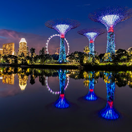 Garden by The Bay by Gordon Koh - City,  Street & Park  City Parks ( garden by the bay, reflection, supertrees, super trees, asia, trees, night, travel, singapore )
