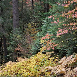 Autumn in the Forest by Sarah Farber - Landscapes Forests