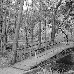 Natural  by Arun Guna - Nature Up Close Trees & Bushes ( sand, trees, bridge, light )