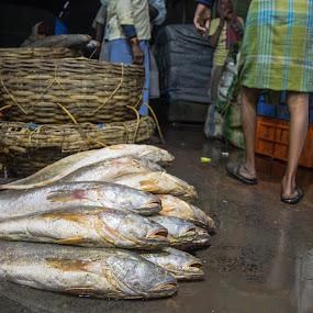 Morning walk in wholesale Fish Market  by Vishal  Singh - Uncategorized All Uncategorized ( fish., kolkata, street, places, travel, people, fish_market )