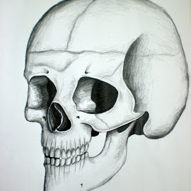 Skull by Natasha Rupert - Drawing All Drawing ( pencil, sketch, skull, bones, drawing )