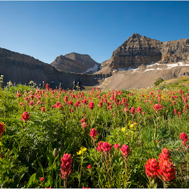Wild Flowers in Full Bloom by Kerry Bishop - Landscapes Mountains & Hills