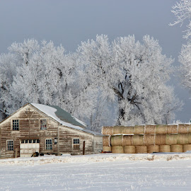Winter on farm by Carol Jones - Buildings & Architecture Other Exteriors