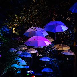 by Nico Kranenburg - City,  Street & Park  Night ( blue, central park of rotterdam, electric run, night shot,  )