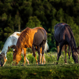 untitled by Dragan Milovanovic - Animals Horses