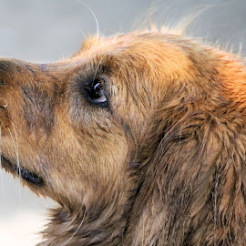 Windy Day 1 by Terry Saxby - Animals - Dogs Portraits ( canada, terry, goderich, ontario, dog, saxby, nancy )