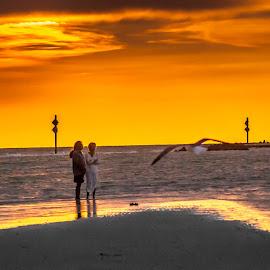 Seagull at Sunset by Pat Lasley - Landscapes Sunsets & Sunrises ( florida, sunset, beach, golden hour, honeymoon island )