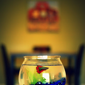 Betta Fish  by Abhay Sharma - Artistic Objects Other Objects