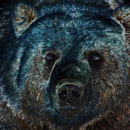 by Jennifer Blair - Illustration Animals