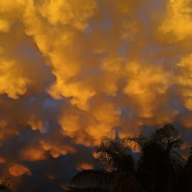 Golden clouds 2 by Hennie Wolmarans - Landscapes Weather ( clouds, sky, nature, weather, golden )