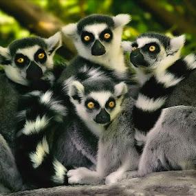 Family by Cheri McEachin - Animals Other Mammals