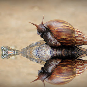 swim with the turtles by Irfan Hikmawan - Animals Amphibians ( macro,  )