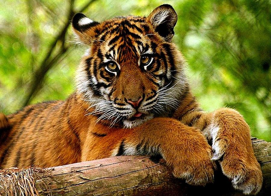 by Ralph Harvey - Animals Other Mammals