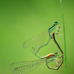 Loving by Said  Ikhsan - Animals Insects & Spiders ( animals, macro, nature )