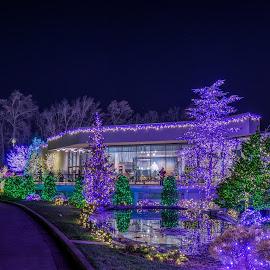2015 Festival of Lights - Visitor Center - Washington, DC Mormon Temple by Gary Stanley - Buildings & Architecture Other Exteriors ( dc, washington, latter day saints, christmas lights, mormon temple, lds )