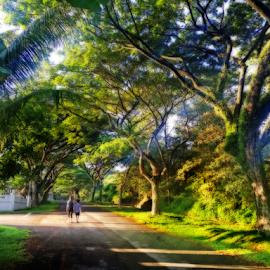 Morning Walk At Neighborhood by Steven De Siow - City,  Street & Park  Neighborhoods ( green, morning walk, neighborhood, walk, morning,  )