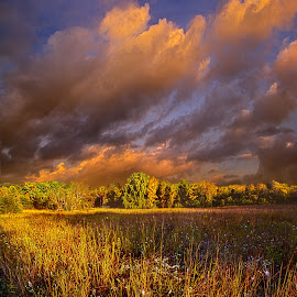 Breaking Through by Phil Koch - Landscapes Prairies, Meadows & Fields ( vertical, farmland, yellow, leaves, love, sky, tree, nature, autumn, perspective, light, orange, twilight, art, agriculture, horizon, portrait, dawn, environment, season, serene, trees, lines, inspirational, wisconsin, natural light, ray, beauty, phil koch, landscape, spring, sun, photography, farm, horizons, inspired, clouds, office, park, green, beautiful, scenic, morning, shadows, field, red, blue, sunset, amber, peace, meadow, summer, beam, sunrise, earth )