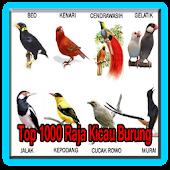 Free Download 1000 top canto dos pássaros rei APK for Samsung