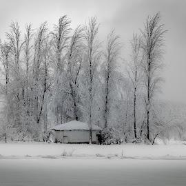 frozen by Murat Besbudak - Landscapes Prairies, Meadows & Fields