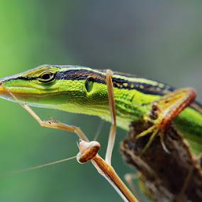 by Goestie Rama - Animals Reptiles
