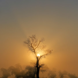 Enchanted Forest by Khawaja Hamza - Landscapes Forests ( foggy sunrise, tree, fog, foggy forest, enchanted, sunrise, alone, standout )